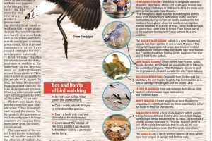 Migratory birds that are evading city lakes