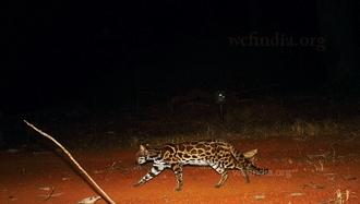 camera-trapping-2