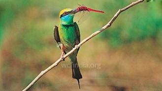 foodguildbird-1