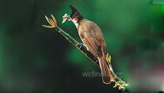 foodguildbird-2