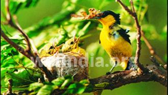 foodguildbird_4